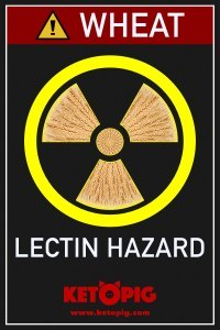 Wheat lectin hazard